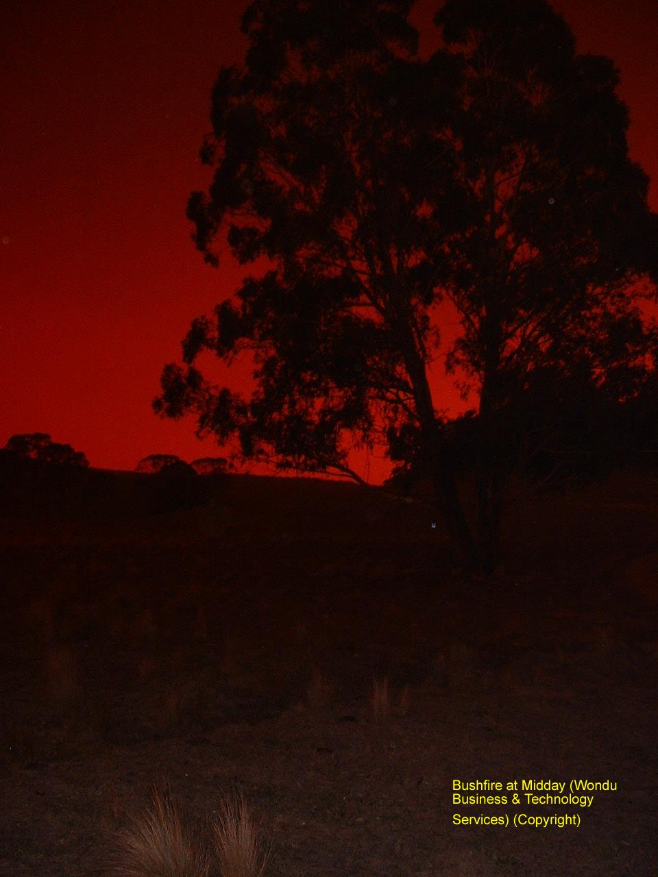 BushfireMidday